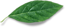 Cyber Vitamins Real Leaf Accent